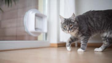 chat tourne en rond