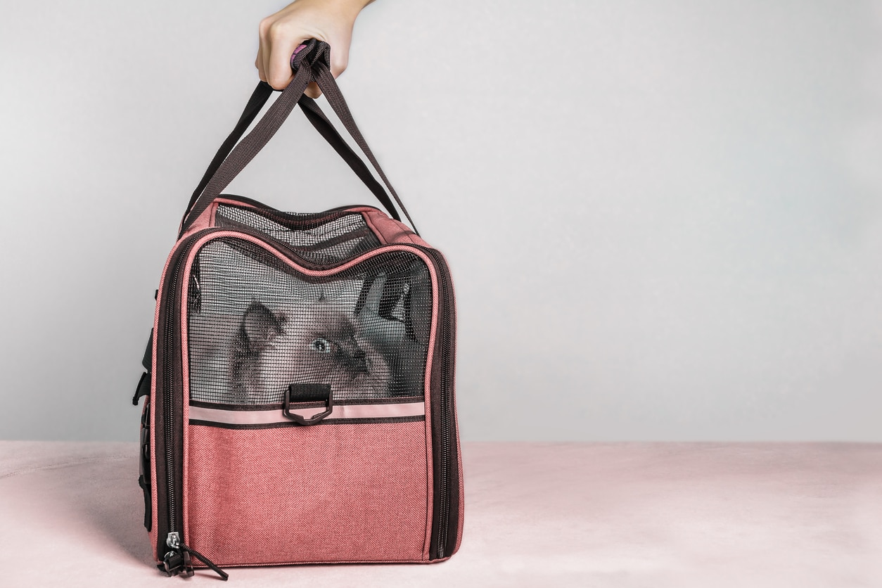 sac de transport chat