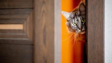 chat porte