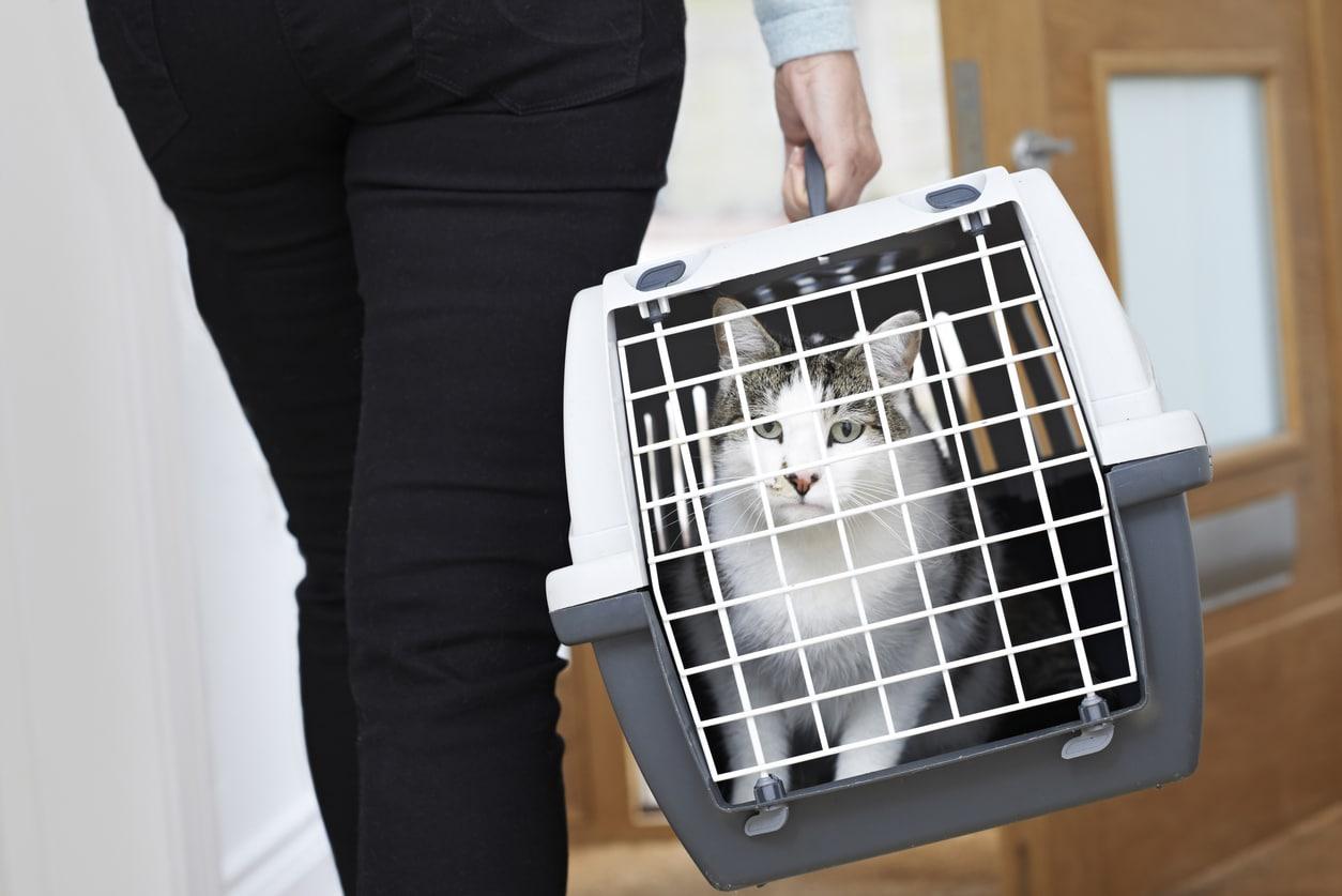 caisse de transport chat