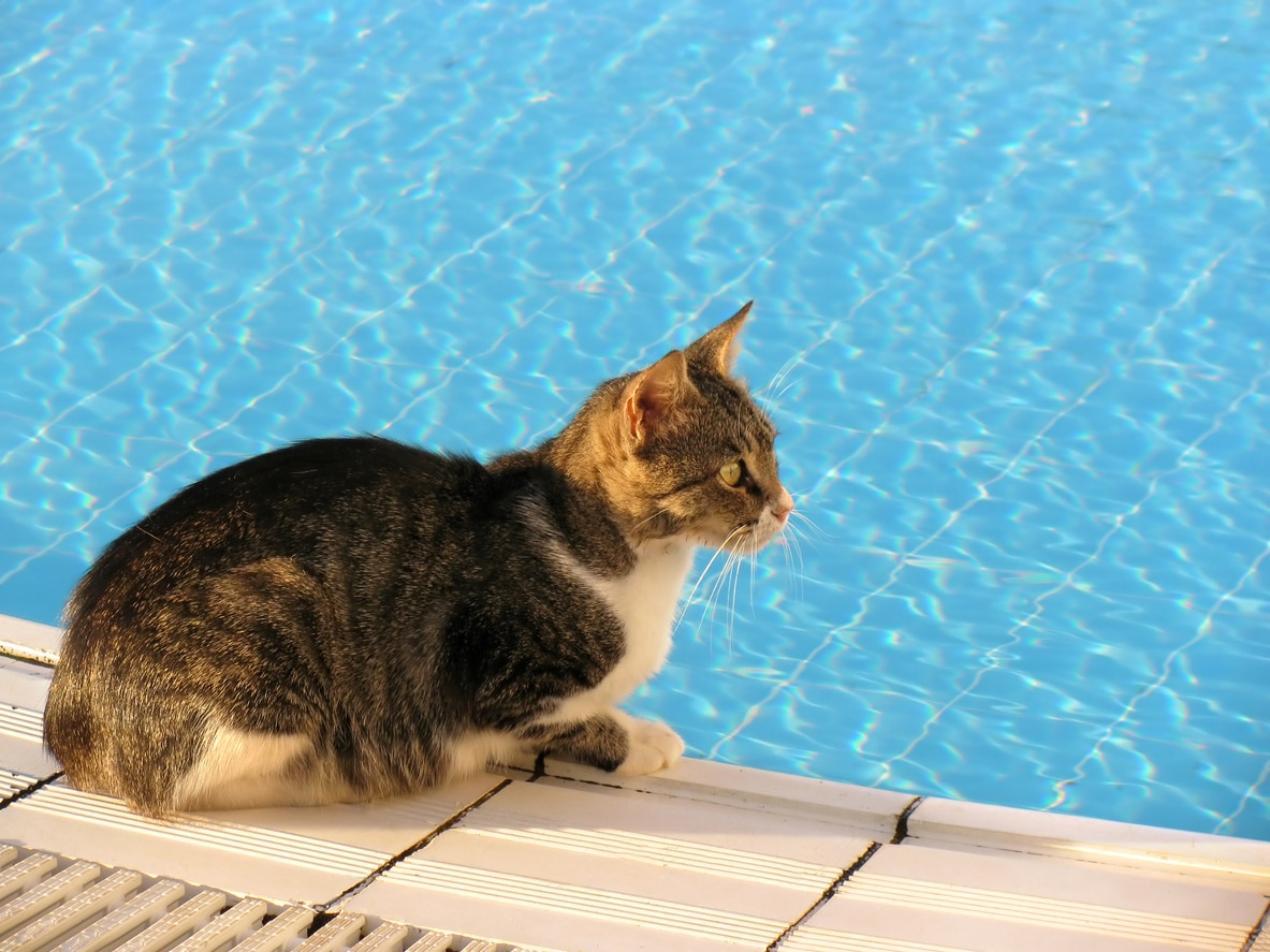 chat piscine