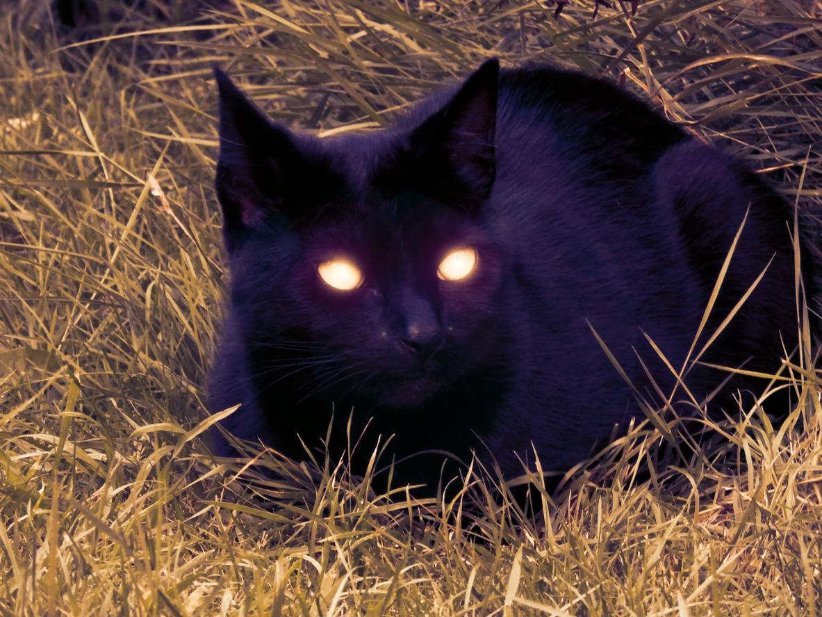chat yeux qui brillent