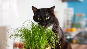 chat vermifuge naturel