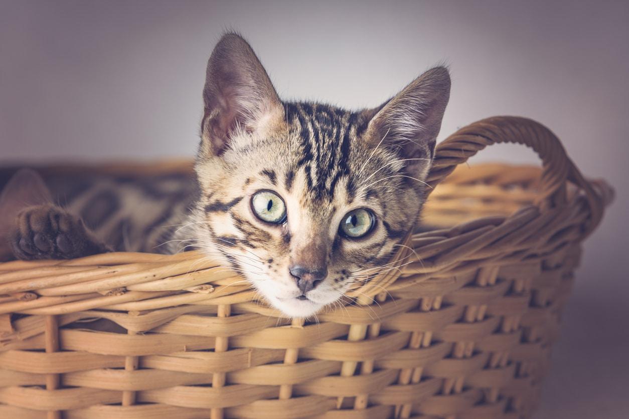 chat panier en osier