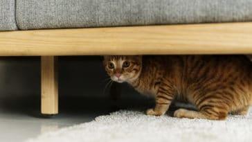 chat caché peur canapé