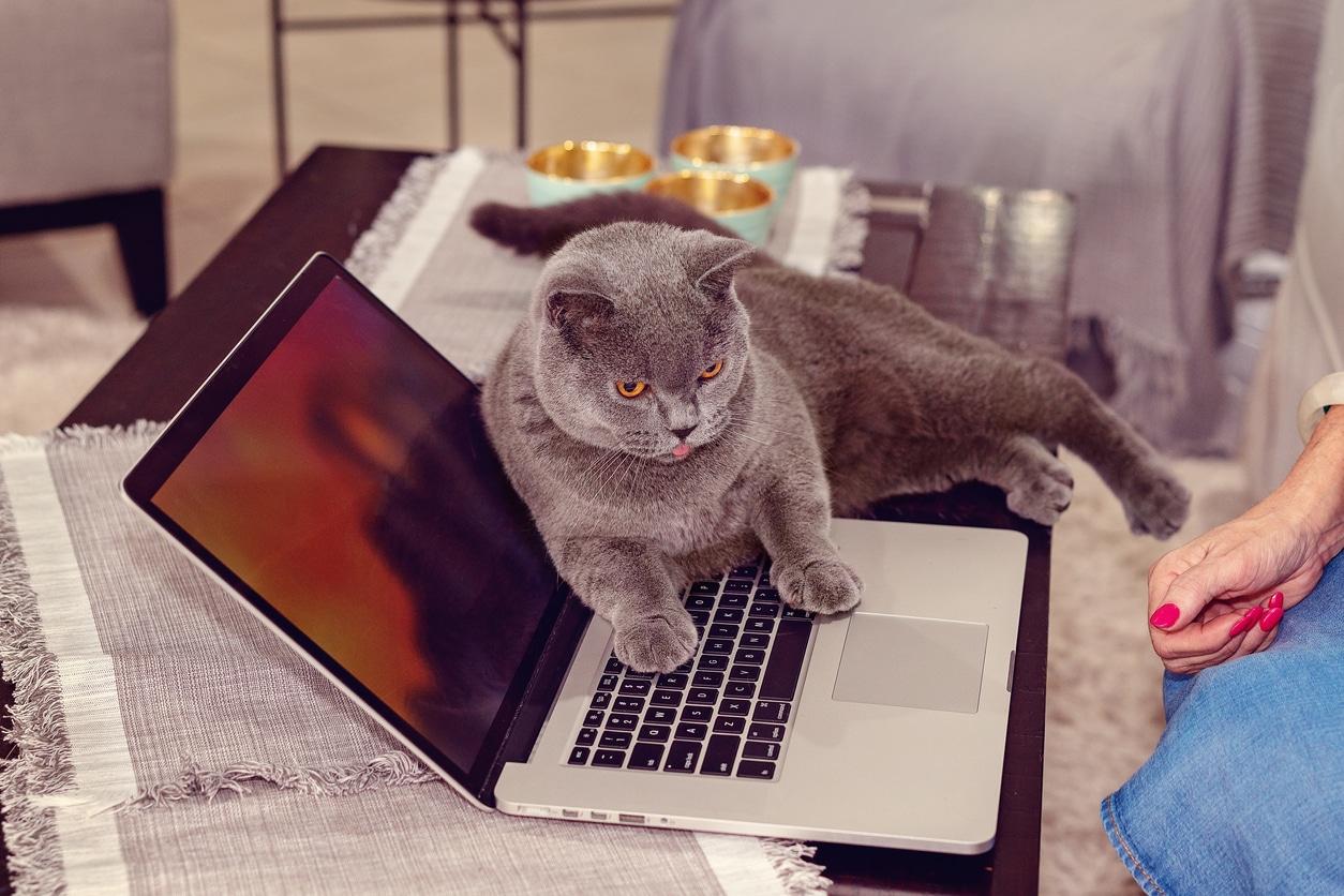 chat ordinateur chaleur