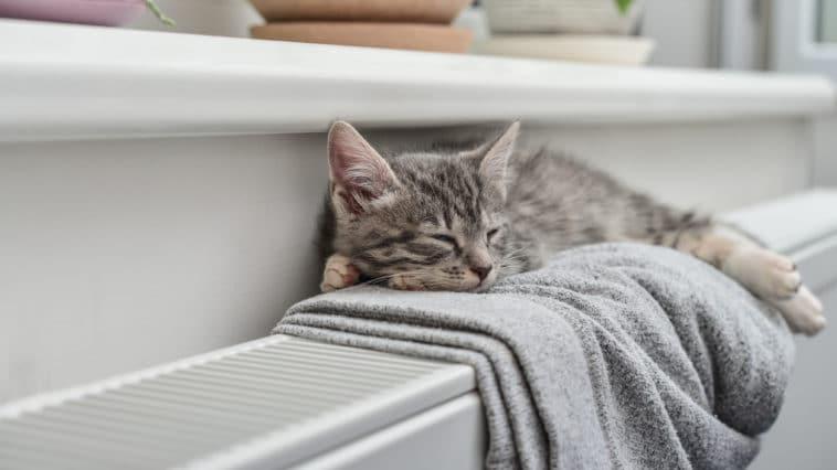 chat gris sieste radiateur chaleur