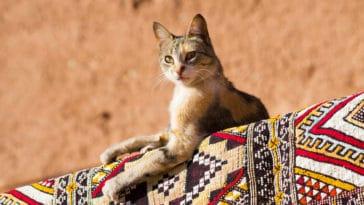 chat extérieur soleil