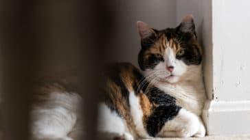 chat seul dans un coin boude triste