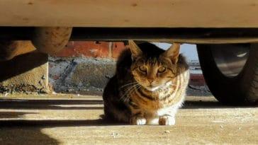 chat caché perdu voiture
