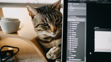 chat ordinateur télétravail