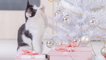 chat cadeaux noel sapin