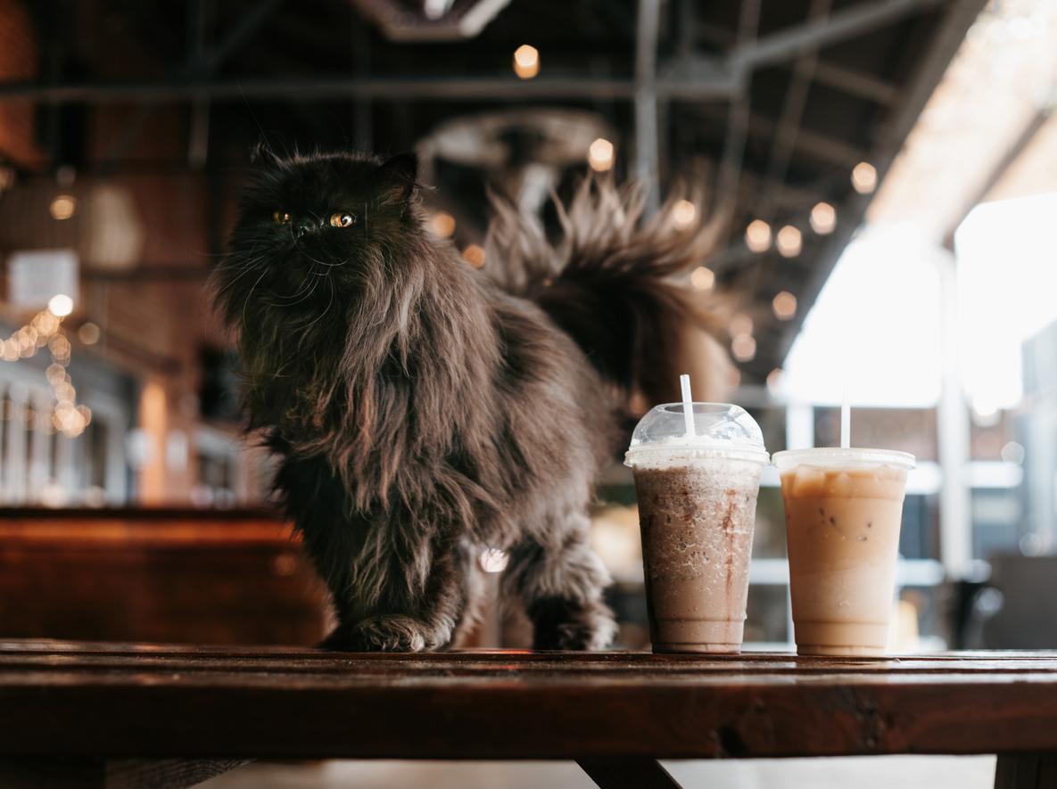 chat sur un comptoir à côté de boissons