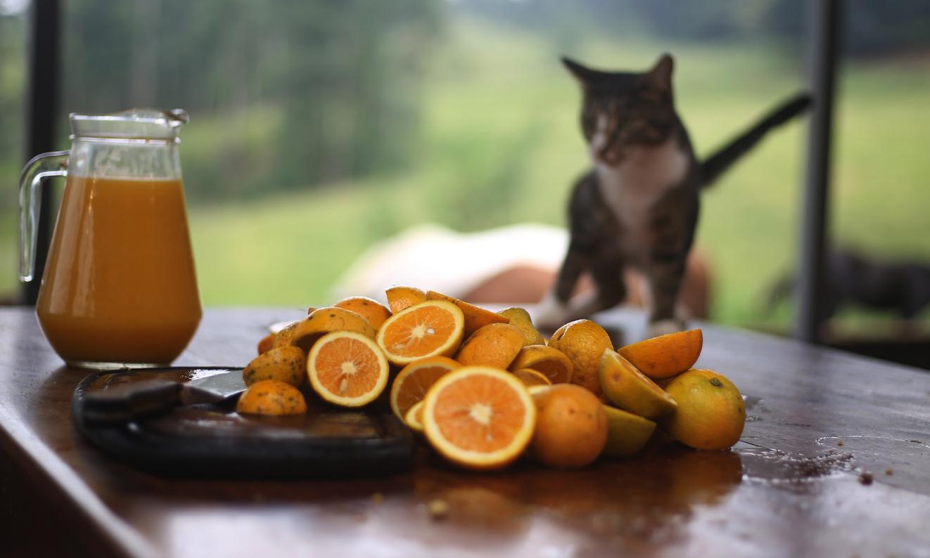 chat jus de fruits