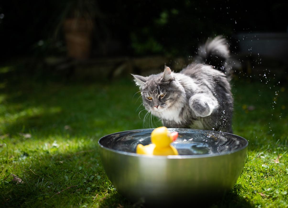 chat joue eau