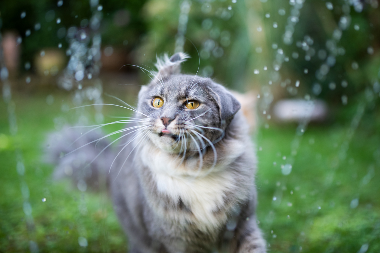 chat eau