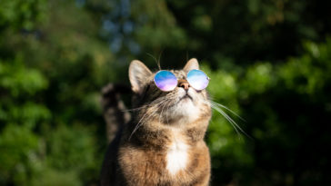 chat canicule