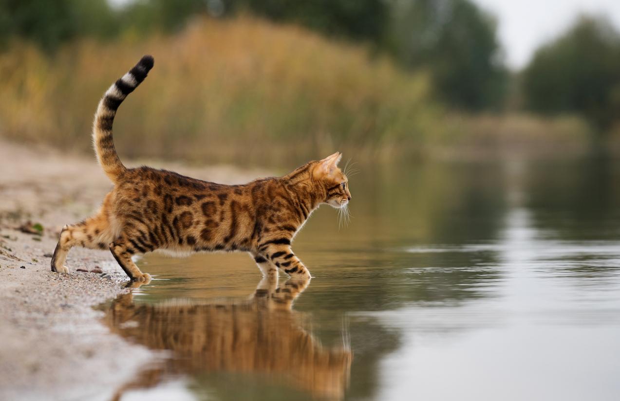 chat se baigne