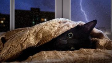 chat orage