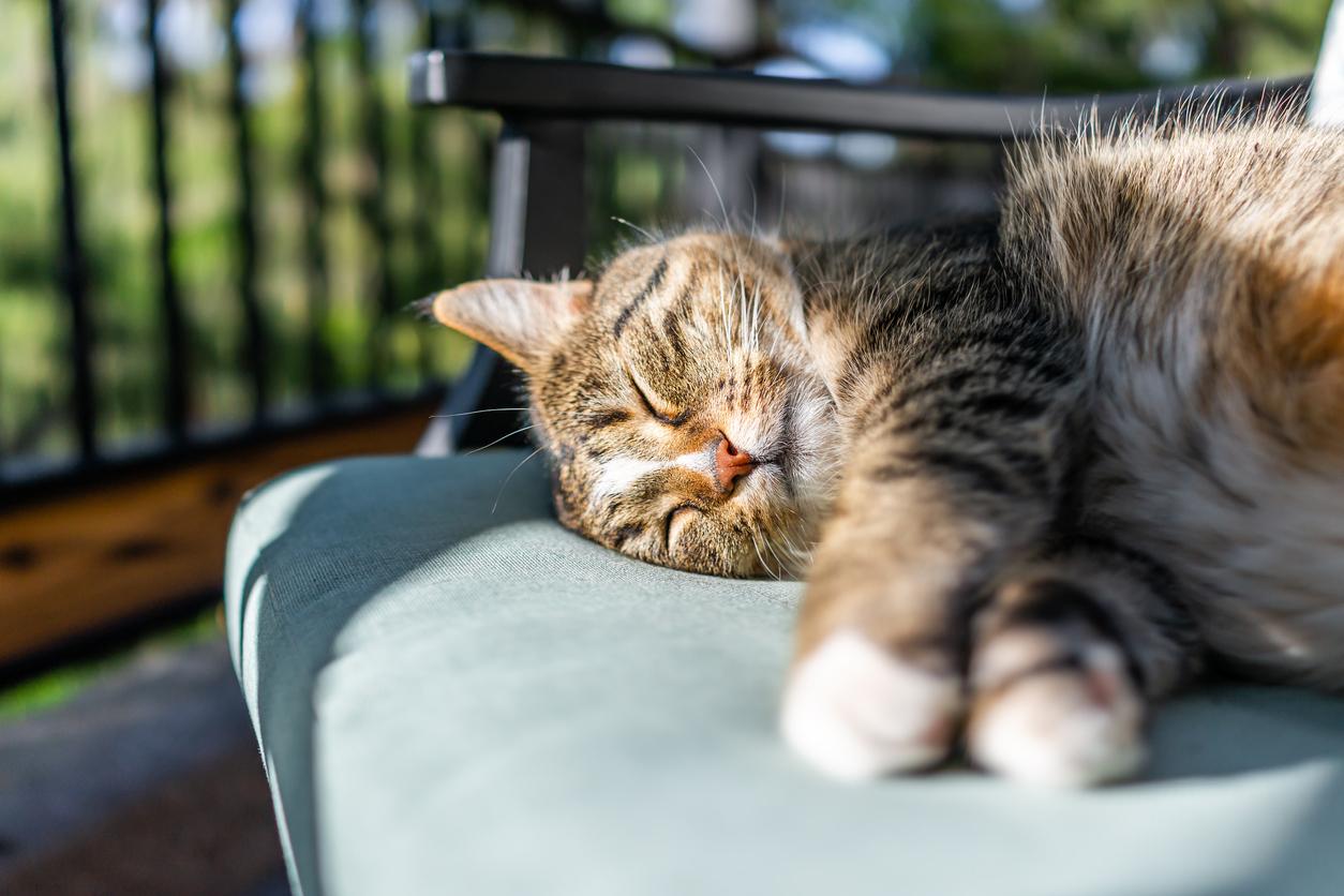 chat couché soleil